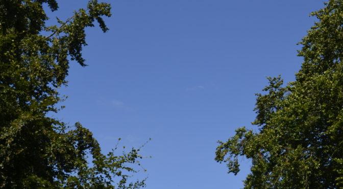 Blå himmel och spelmansstämma i gröngräset!